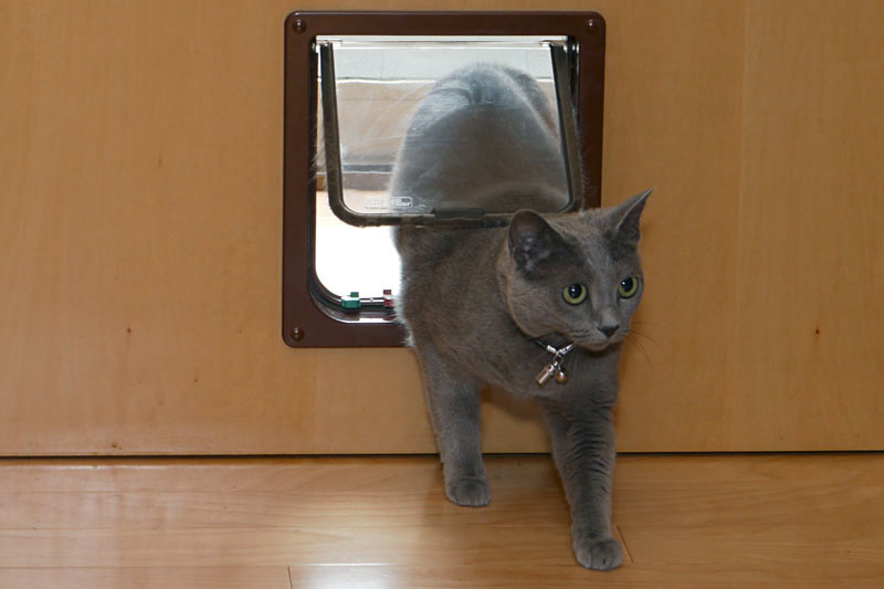 Stpb2012 10 25 cat2